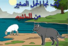 صورة قصة الحمل الصغير والذئب الجائع قصص الحيوانات للاطفال