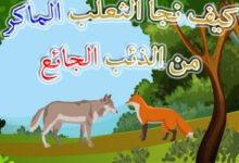 صورة قصة الثعلب المكار والذئب الجائع قصص الحيوانات للأطفال