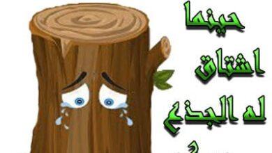 صورة قصة جذع النخلة مع الرسول ﷺ قصص اطفال اسلامية