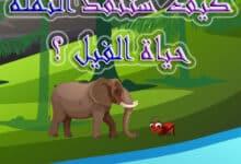 صورة قصة الفيل والنملة قصص اطفال قصيرة
