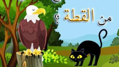 صورة قصة النسر الأعمي مع القطة قصص اطفال عن الحيوانات
